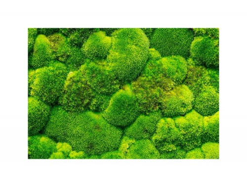 Green-Mood-Green-Walls-Ball-Moss-Close-View