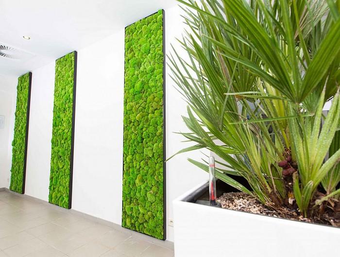 Green-Mood-Green-Walls-Ball-Moss-Euroscreen