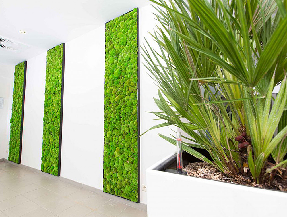 Green-Mood-Green-Walls-Ball-Moss-Euroscreen