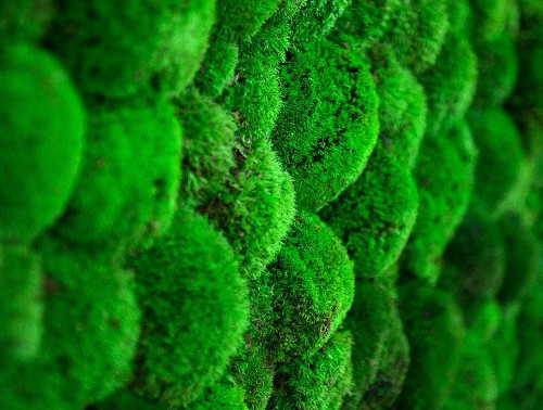 Green-Mood-Green-Walls-Ball-Moss-Showroom