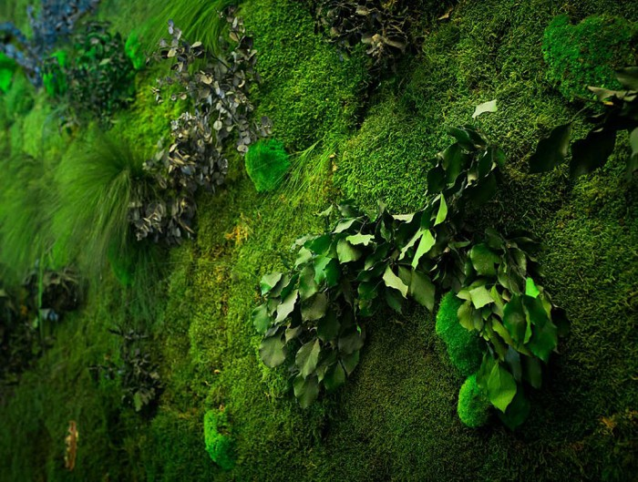 Green-Mood-Green-Walls-Forest-Passage-Close-Up