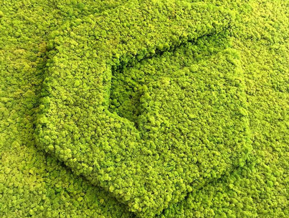 Green-Mood-Green-Walls-Lichen-Moss-3D-Logo-in-Belgium