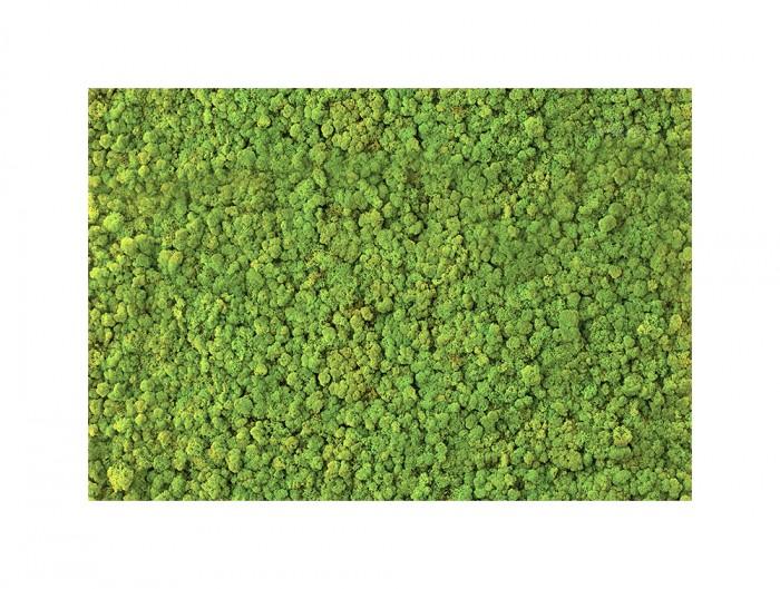 Green-Mood-Green-Walls-Lichen-Moss-Close-View