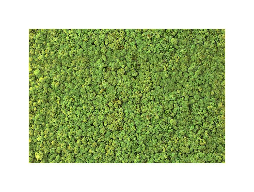 Green Mood Lichen Moss Green Wall