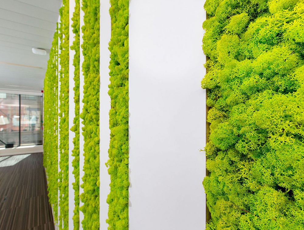 Green-Mood-Green-Walls-Lichen-Moss-in-Sanoma-Office-Close-View
