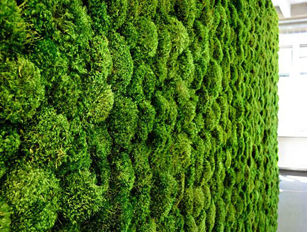 Green-Mood-Green-Walls-Lichen-Moss