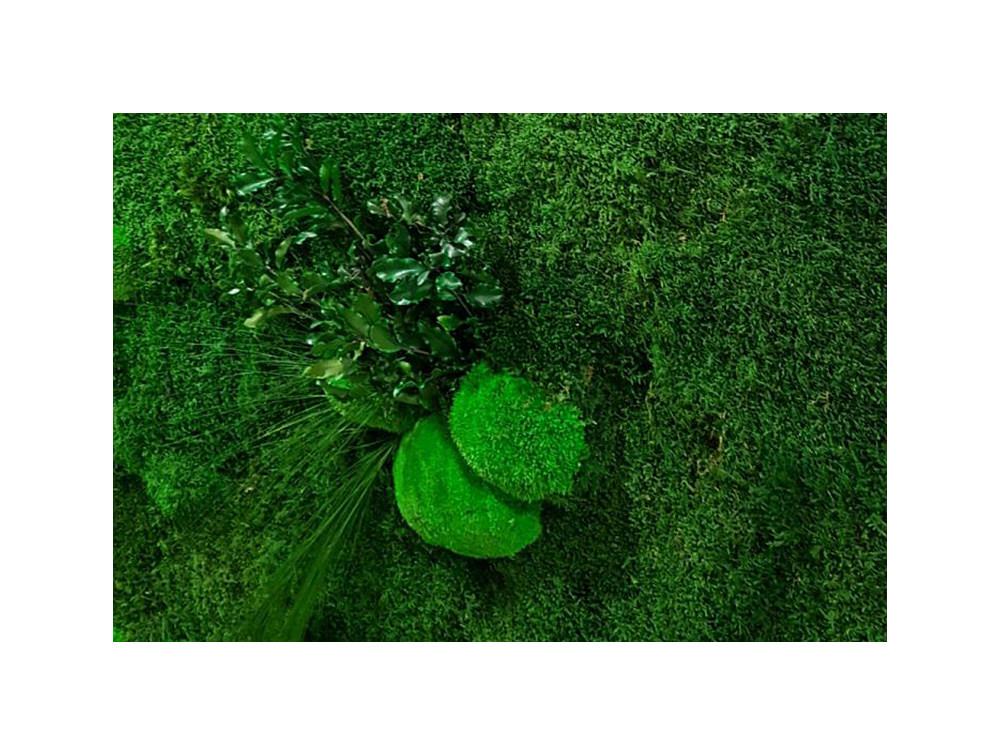 Green Mood Light Forest Green Wall