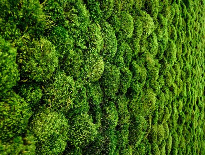 Green-Mood-Green-Walls-Provence-Moss-Close-Up