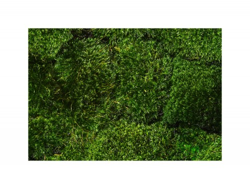 Green-Mood-Green-Walls-Provence-Moss-Close-View