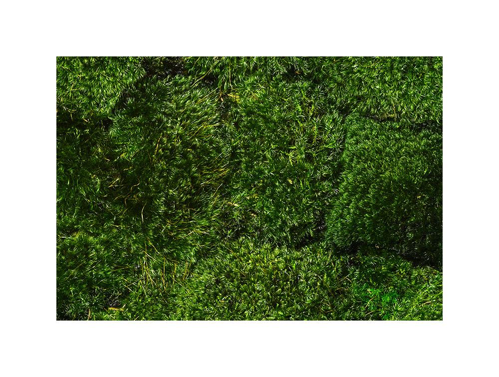Green Mood Provence Moss Green Wall