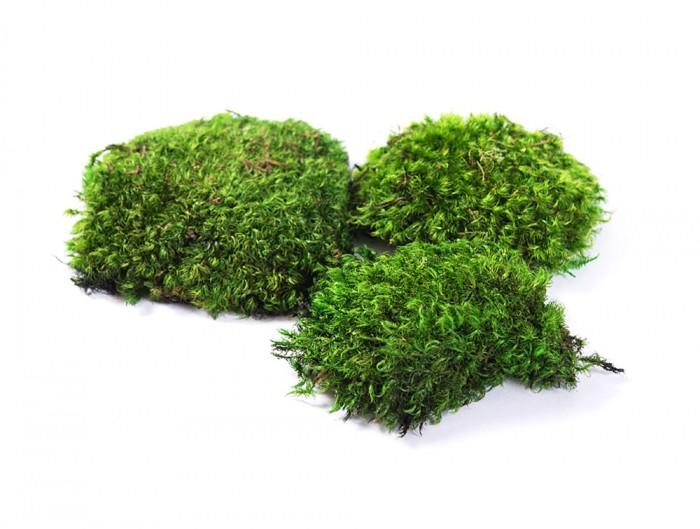 Green-Mood-Green-Walls-Provence-Moss-Preserved