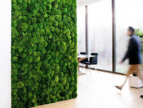 Green-Mood-Green-Walls-Provence-Moss-Showroom