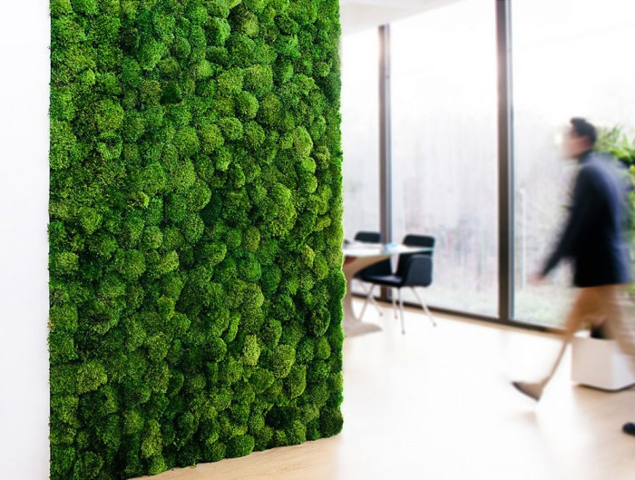 Green-Mood-Green-Walls-Provence-Moss-Showroom