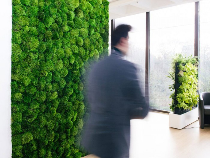 Green-Mood-Green-Walls-Provence-Moss-Showroom-Close-Up
