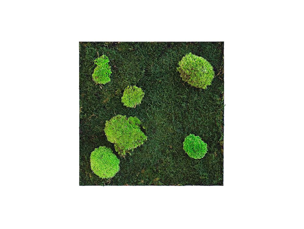 Green Mood Island Flat & Ball Moss Frame - 400 x 400mm