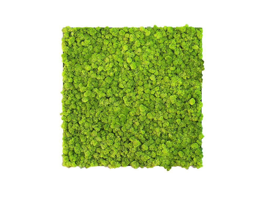 Green Mood Khloe Lichen Moss Frame - 600x600mm