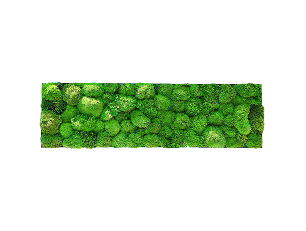 Green Mood Kokoon Ball Moss Frame - 350 x 650mm