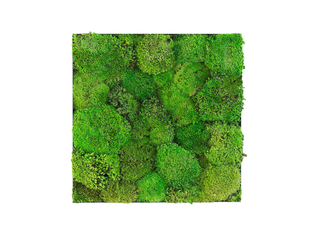 Green Mood Kokoon Ball Moss Frame - 400 x 400mm
