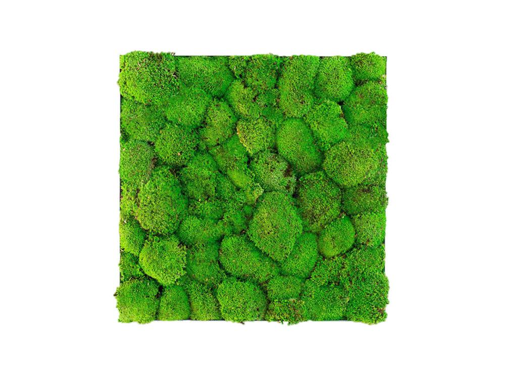 Green Mood Kokoon Ball Moss Frame - 600x600mm