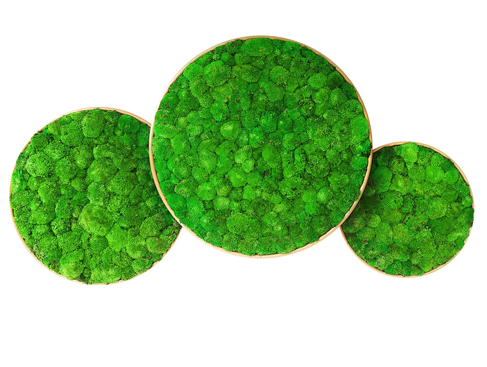 Green-Mood-Moss-Acoustic-Circle-Wall-Hanging-Panels-with-Gold-Structure-and-Ball-Moss-Filling-Available-in-Different-Sizes