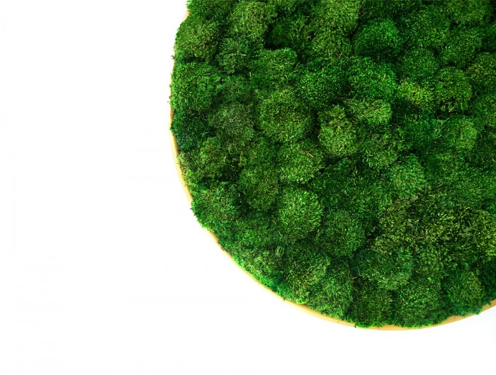 Green-Mood-Moss-Acoustic-Circle-Wall-Hanging-Panels-with-Gold-Structure-and-Ball-Moss-Filling-Close-View