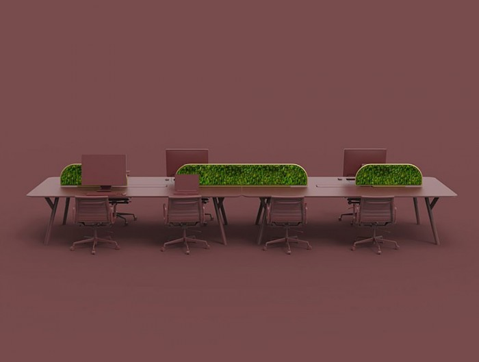 Green-Mood-Moss-Acoustic-Desk-Screens-with-Gold-Structure-in-Maroon-Office-Setting-Far-View