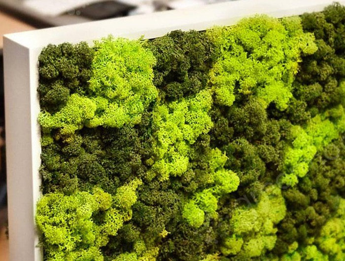 Green-Mood-Moss-Acoustic-Rectangular-Free-Standing-Screen-with-Green-Lichen-Moss-Filling-Close-View