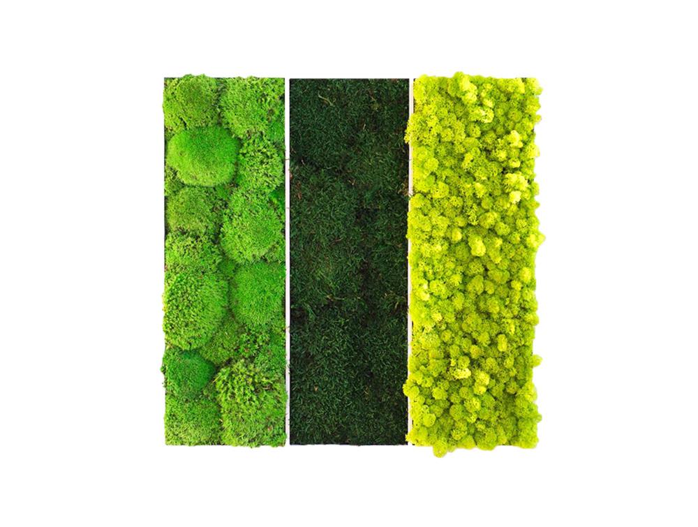 Green Mood Triple Frame