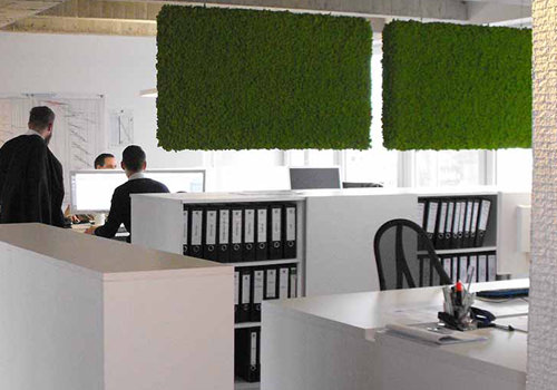 Island-Moss-Plant-Hanging-Acoustic-Panels-in-Office-500x350