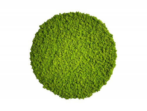 StyleGreen-Circle-Reindeer-Moss-Screens-800x800mm