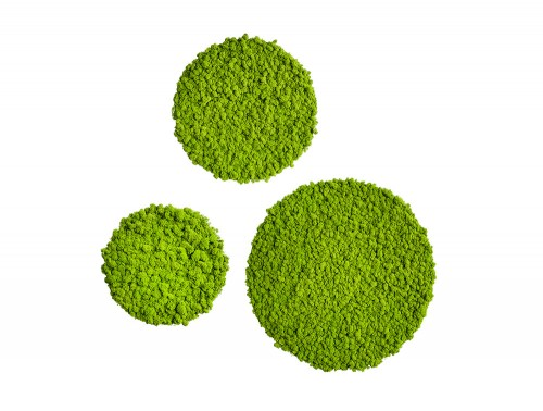 StyleGreen-Circle-Reindeer-Moss-Screens-Set-of-Three