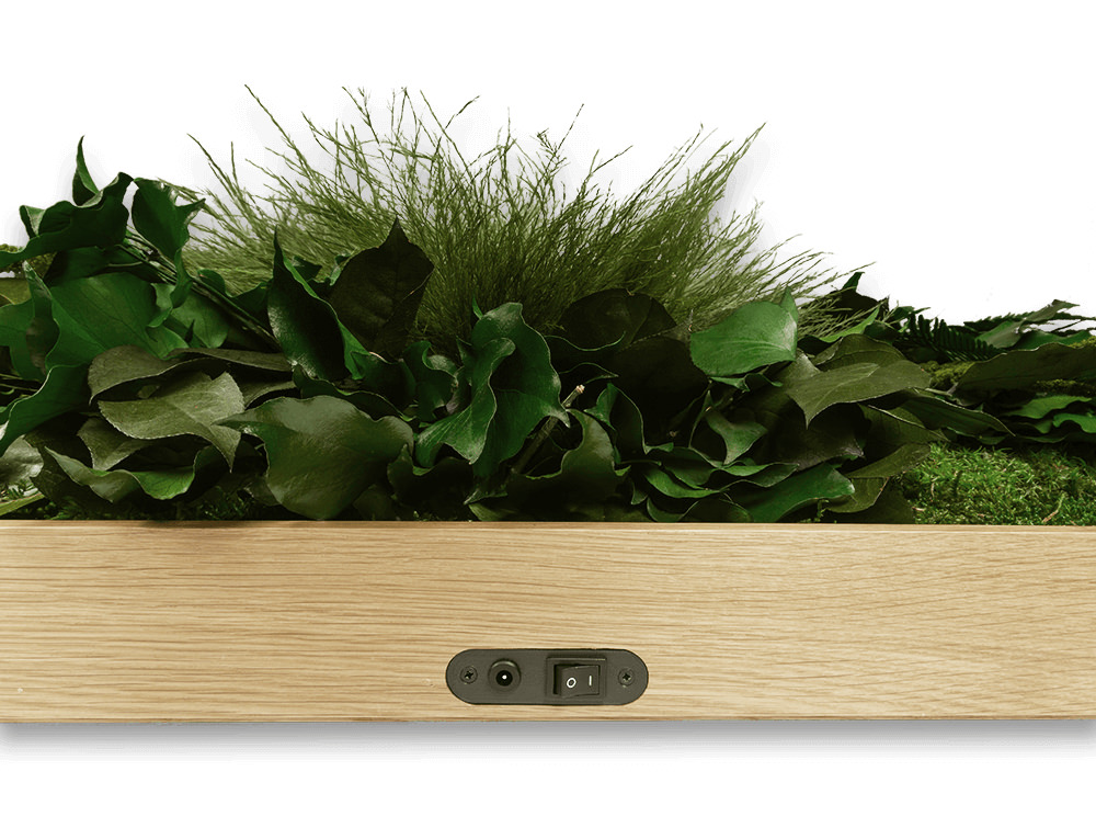 StyleGreen-Plant-Sound-Picture-with-Jungle-Filling-Flat-Detailed-View