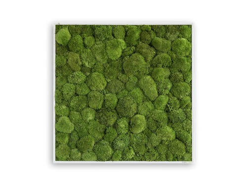 StyleGreen-Pole-Moss-Frames-800x800mm