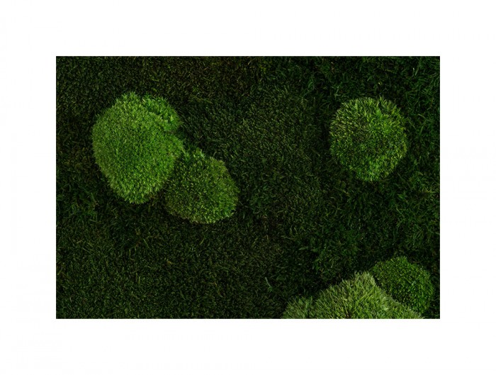 StyleGreen-Preserved-Forest-Pole-Moss-Green-Wall