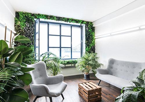 StyleGreen Preserved Jungle Green Wall in Sitting Area 500x350
