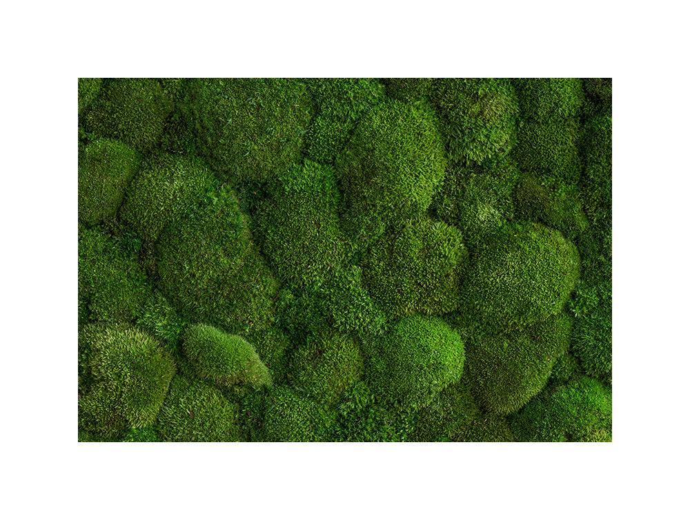 StyleGreen-Preserved-Pole-Moss-Green-Wall