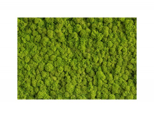 StyleGreen-Preserved-Reindeer-Moss-Green-Wall