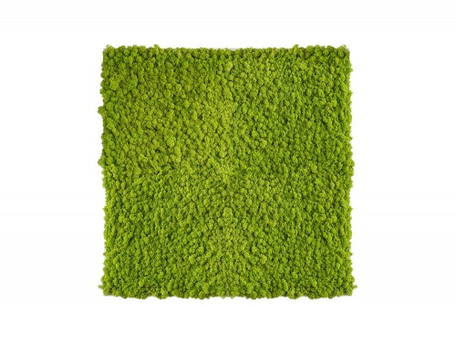 StyleGreen-Reindeer-Moss-Frames-800x800mm-in-Light-Green
