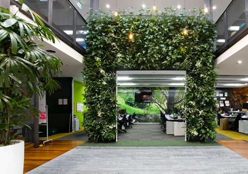 Sustainable Office Plants with Living Wall