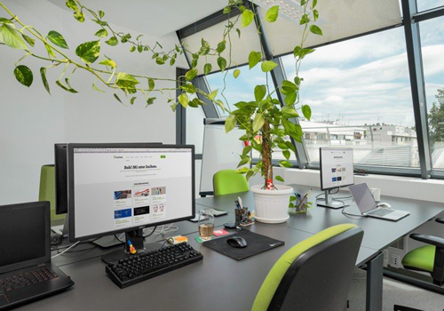 Office Plants to Help with Stress