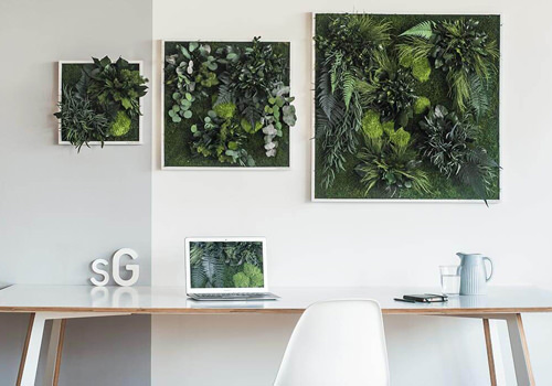 Plant Frames with Moss and Forest Plants-500x350