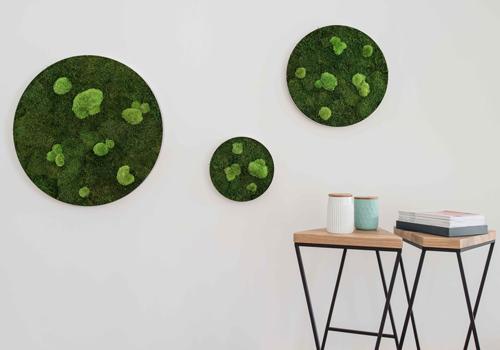 StyleGreen Moss Circle Acoustic Panels 500x350