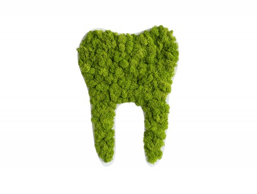 styleGreen-Pictogram-Green-Moss-Dental-Tooth-300mm-Sign-with-Reindeer-Moss